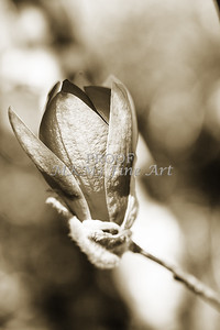 Wall Art Tulip Tree Bloom 1806.214