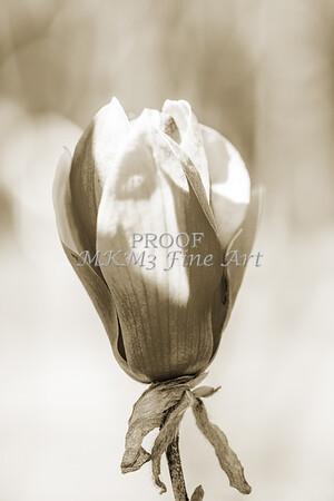 Canvas Print Tulip Tree Bloom 1806.211
