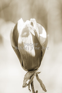 Canvas Print Tulip Tree Bloom 1806.211