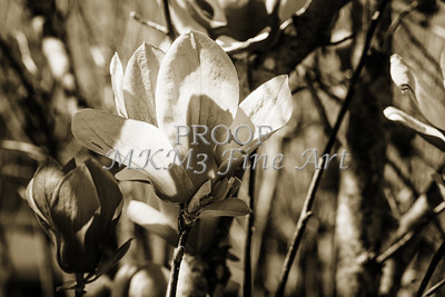 FLower Bouqueet Tulip Tree Bloom 1806.207