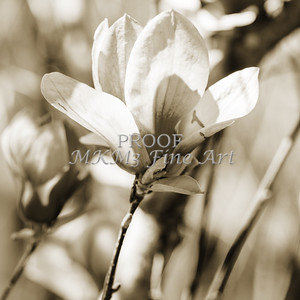 Tulip Tree Flower Bouquet Bloom 1806.209
