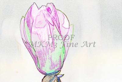 Tulip Tree Drawing Wall Art  1806.512