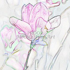 Tulip Tree Drawing Canvas Print 1806.509