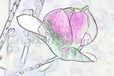 Tulip Tree FLower Art Drawing 1806.505