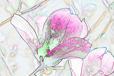 Tulip Tree Light Drawing 1806.501