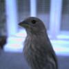 SNC7300 JPEG Encoder