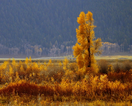 Gold in Yellowstone