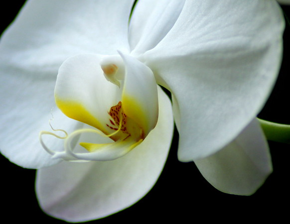 Lone Orchid