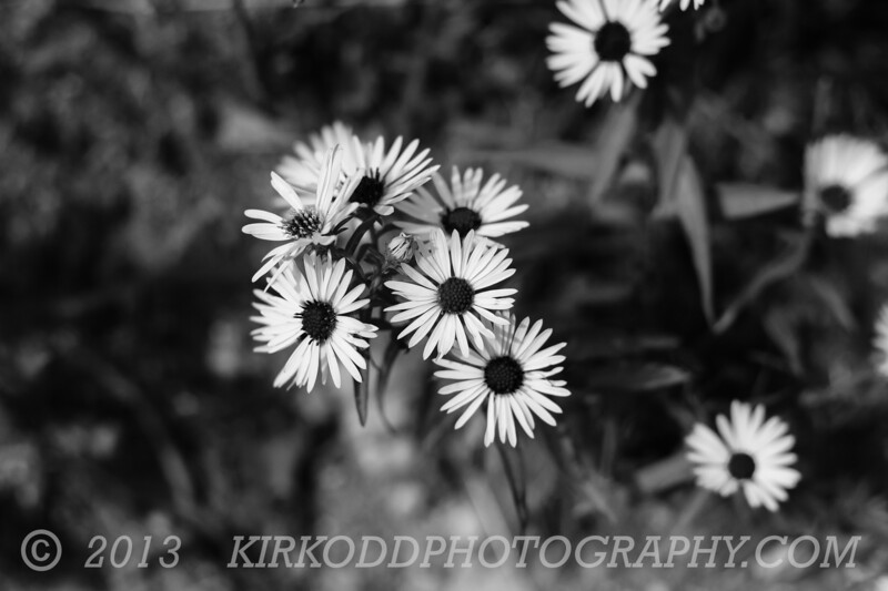 Black and White Flowers 1