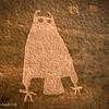 Owl visits Moab