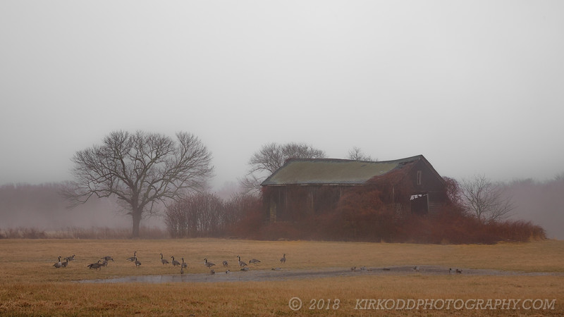 Old Barn in the Fog - Color