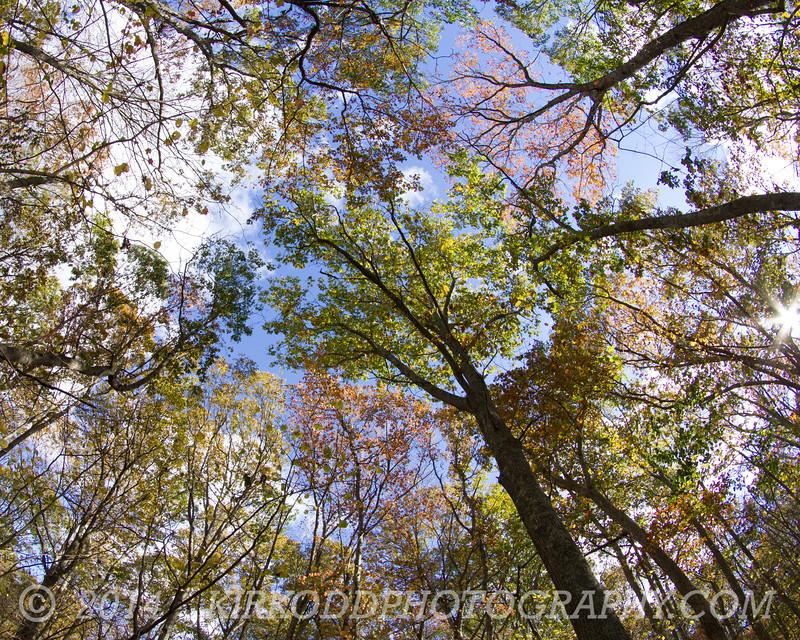 Look Up! - Fall Foliage