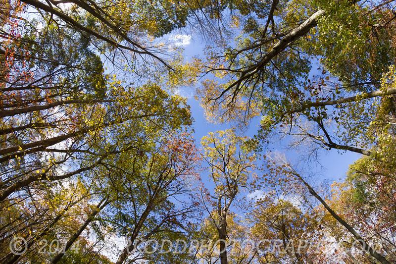 Look Up 2! - Fall Foliage