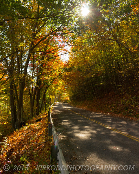 An Unexpected Autumn Road
