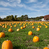 Pumpkin Patch - Whittle's Willow Spring Farm - Mystic CT