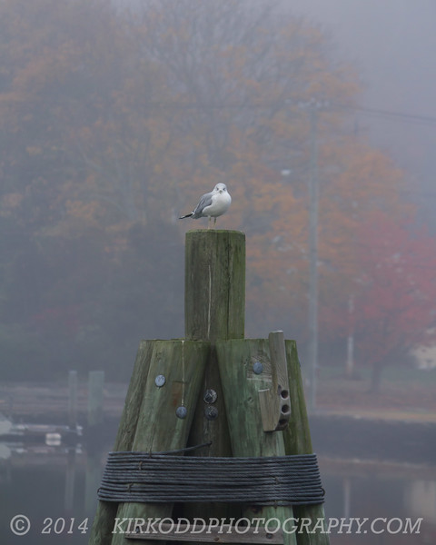 Seagull on his Throne