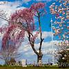 Breezy Pink Tree