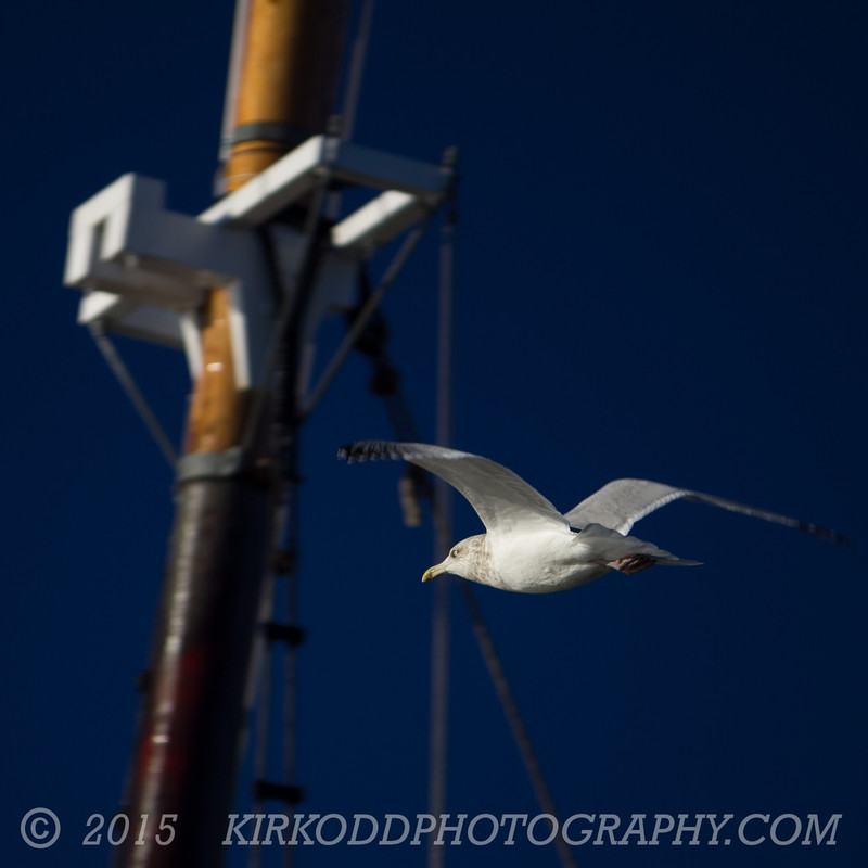 Mystic Seagull