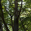 Tall Dead Tree