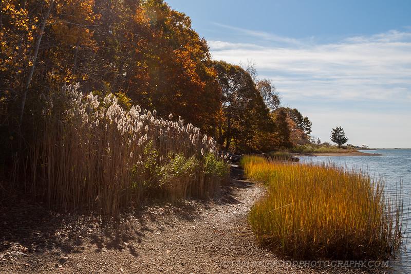 Bluff Point Shoreline
