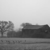Old Barn in the Fog - Black and White