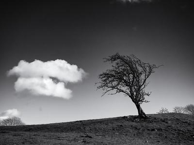 Cloud and Tree