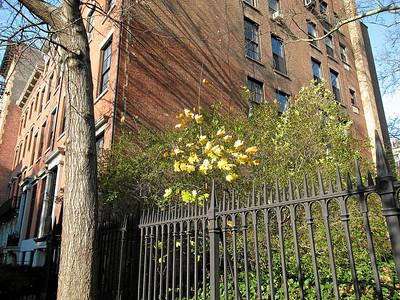 Spring Fence, St. Marks Church yard, East Village, New York City, 2007