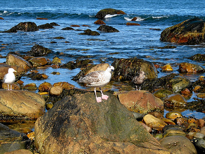 Curious Montauk Point Bird, 2007