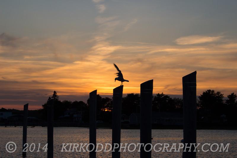 Camp Ellis Sunset - Bird Balance