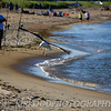Seagull Landing On Ferry Beach