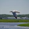 Downward Flap - Seagull