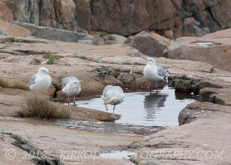 Seagull Swimming Pool 2