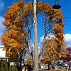Autumn Donut Tree