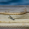 Dragonfly on the Dock