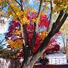 Beautiful Fall Yard