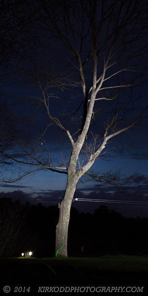 We used a long exposure to capture the night sky, and a flashlight to paint the tree.  The final touch was a green laser, which added the green veins to the bark.