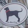 The Black Dog in Mystic, CT
