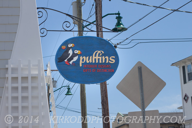 Puffins in Mystic, CT