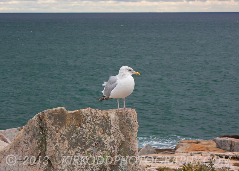 Gull on Watch