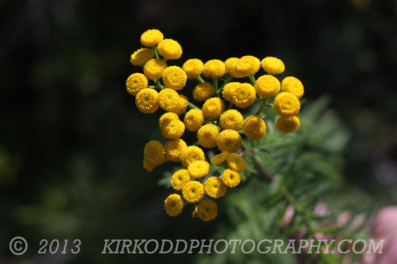 Golden Orbs