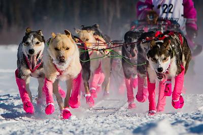 """Week #1 Proj 52 - """"Iditarod restart..."""""""