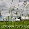 Farm Through The Grass