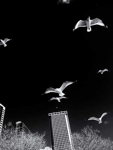 New York Seagulls II