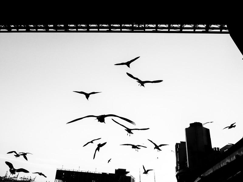 Brooklyn Bridge Seagulls