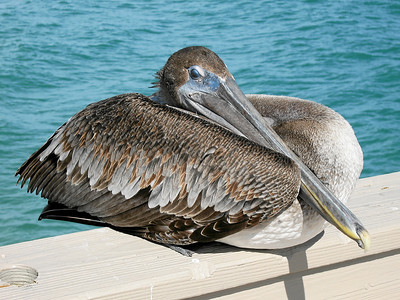 Waiting for leftovers, Bird, Deerfield Beach, Florida 2006