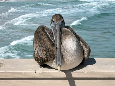 Bird, Deerfield Beach, Florida 2006