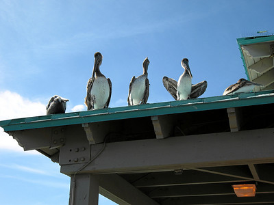 Covering all angles - Birds on a roof, Deerfield Beach, Florida 2006