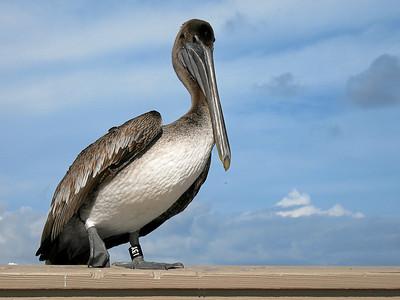 Bird-13Y, Deerfield Beach, Florida, 2006
