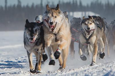 2017 Iditarod - Close up of team leaders
