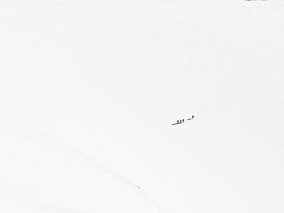 Ant Arctic